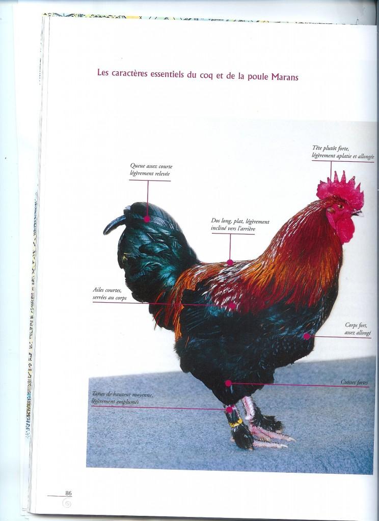 Pour commencer bien selectionner ses reproducteurs notre for Bien nourrir ses poules